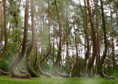 Glinna-forest-1