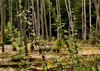 Glinna-forest-3